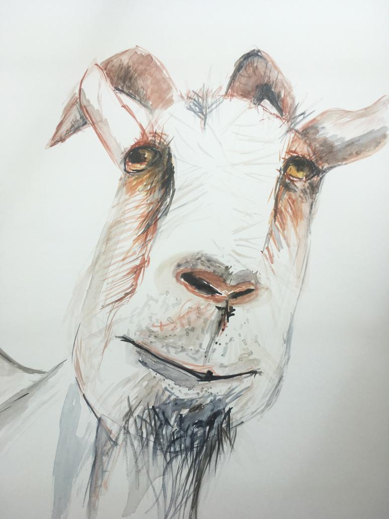 """Sylvia Gatz. """"Ziege"""". 70 x 100 cm. Aquarell auf Papier. 2017"""